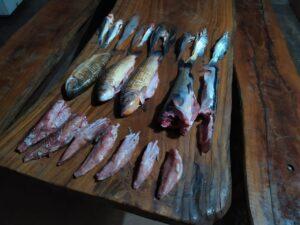 Polícia Militar Ambiental de Costa Rica prende e autua goiano por pesca e transporte de pescado abaixo da medida e acima da cota permitidas e apreende pescado e veículo